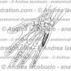 141 – Muscolo Abduttore V dito – Musculus Abductor digiti minimi – Abductor digiti minimi Muscle