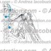004- Nervo Dorsale scapolare – Dorsal scapular Nerve – Nervus Dorsalis scapulae
