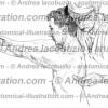 010- Muscolo Gran dentato – Musculus Serratus anterior – Serratus anterior Muscle