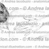 012- Muscolo Piccolo Romboide – Musculus Rhomboideus minor – Rhomboid minor Muscle