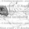 013- Muscolo Piccolo Romboide – Musculus Rhomboideus minor – Rhomboid minor Muscle