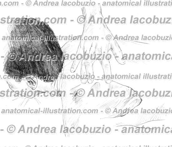 016- Muscolo Grande Romboide – Musculus Rhomboideus major – Rhomboid major Muscle
