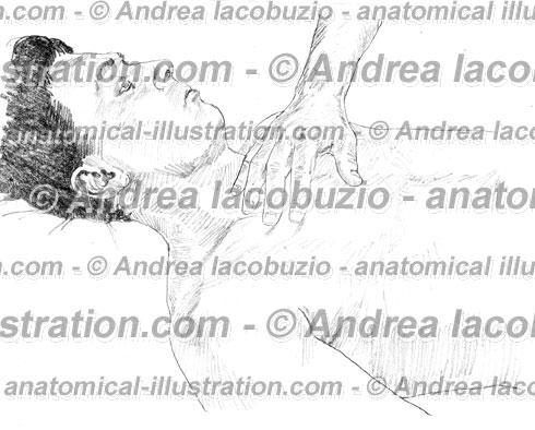 041- Muscolo Piccolo pettorale – Musculus Pectoralis minor – Pectoralis minor Muscle