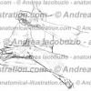 050- Muscolo Deltoide – Deltoid Muscle – Musculus Deltoideus