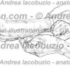 061- Muscolo Anconeo – Anconeus Muscle – Musculus Anconeus