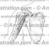 085- Muscolo Coracobrachiale – Musculus Coracobrachialis – Coracobrachialis Muscle