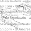 101- Muscolo Palmare lungo – Musculus Palmaris longus – Palmaris longus Muscle