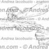 117- Muscolo Estensore breve pollice – Musculus Extensor pollicis brevis – Extensor pollicis brevis Muscle