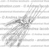 121- Muscolo Abduttore breve pollice – Musculus Abductor pollicis brevis – Abductor pollicis brevis Muscle