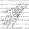 144 – Muscolo Opponente V dito – Musculus Opponens digiti minimi – Muscle Opponens digiti minimi